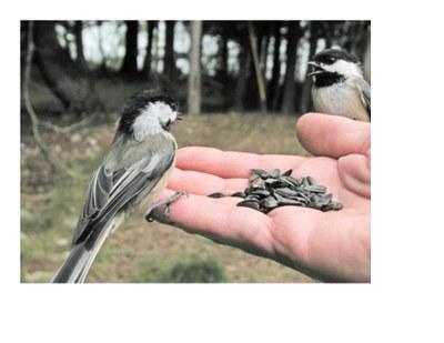 Backyard Birds & Beyond